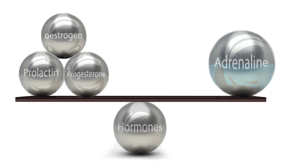 Nutritional therapy guide to balancing hormones