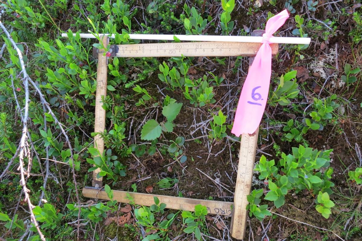 Seedlings in the field Signe Lett 1200x800.jpg