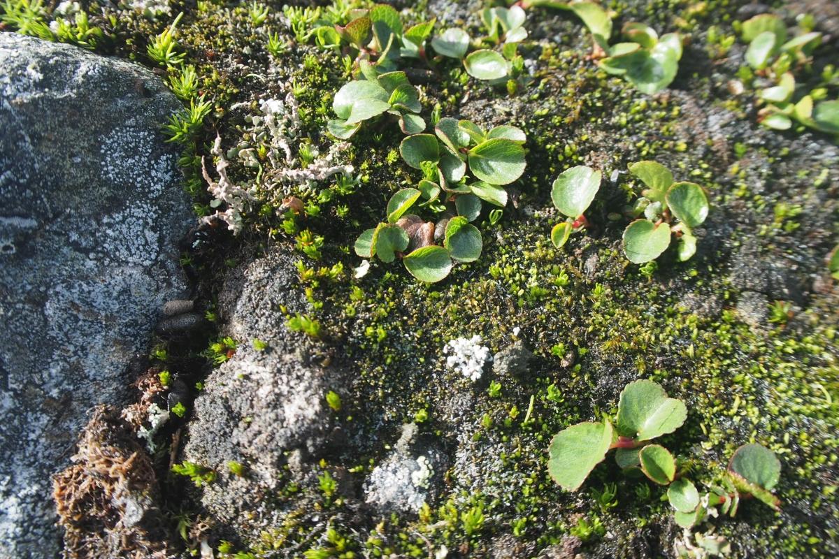 Plant Growth Makoto Kobayashi 1200x800.jpg