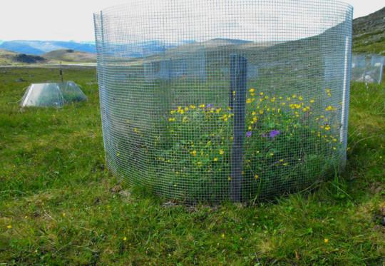 Växthus för tundraväxter.jpg