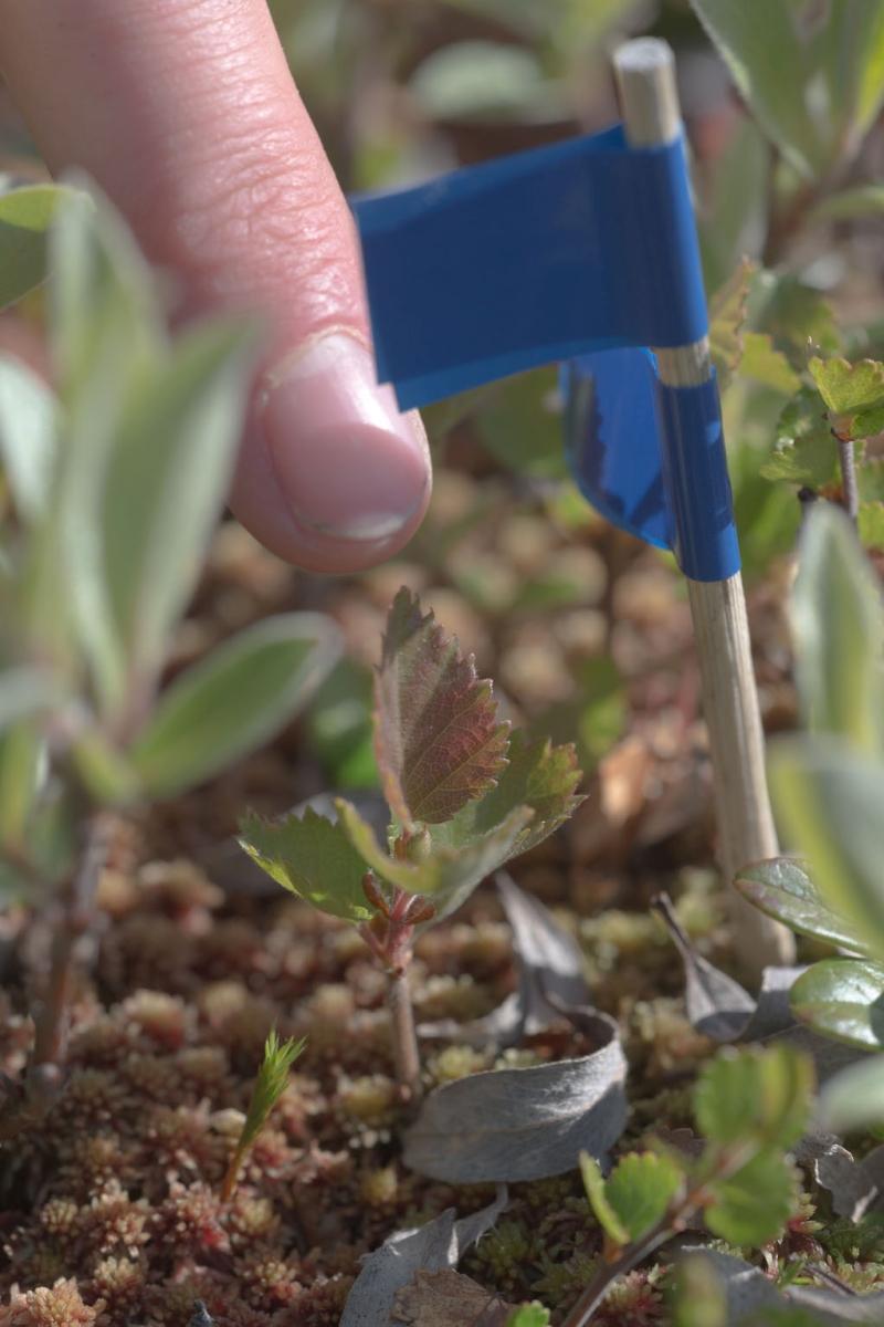 Tree Seedling Ive van Krunkelsven.jpg