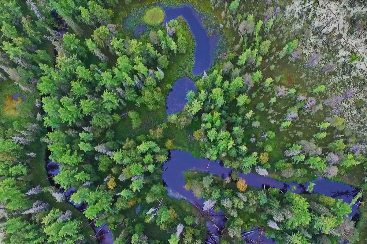 Western Siberia forest patch in a permafrost landscape 1200x800.jpg