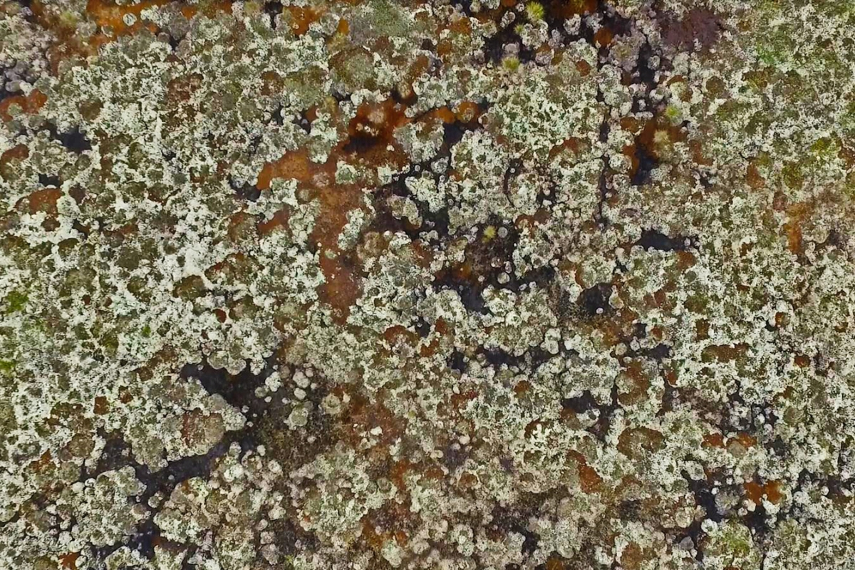 Western Siberia sphagnum in a permafrost landscape 1200x800.jpg