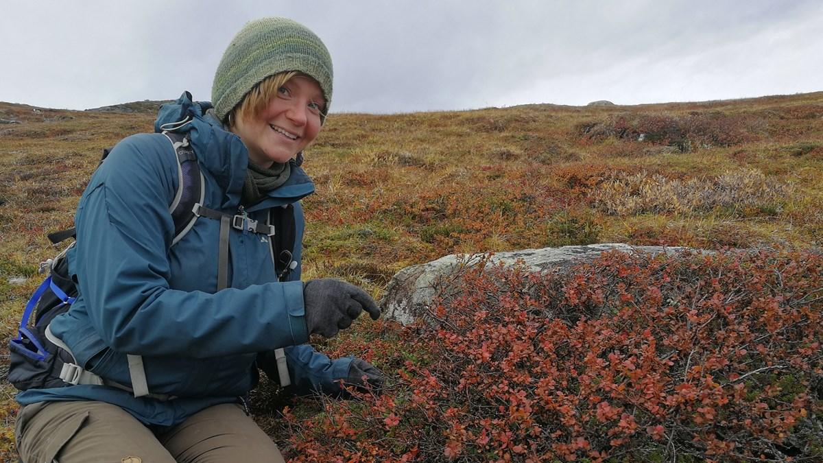 Hannah Rosenzweig är forskarstudent och har tagit prover på berget Nolia i Abisko. Foto: Simon Magnusson/SR
