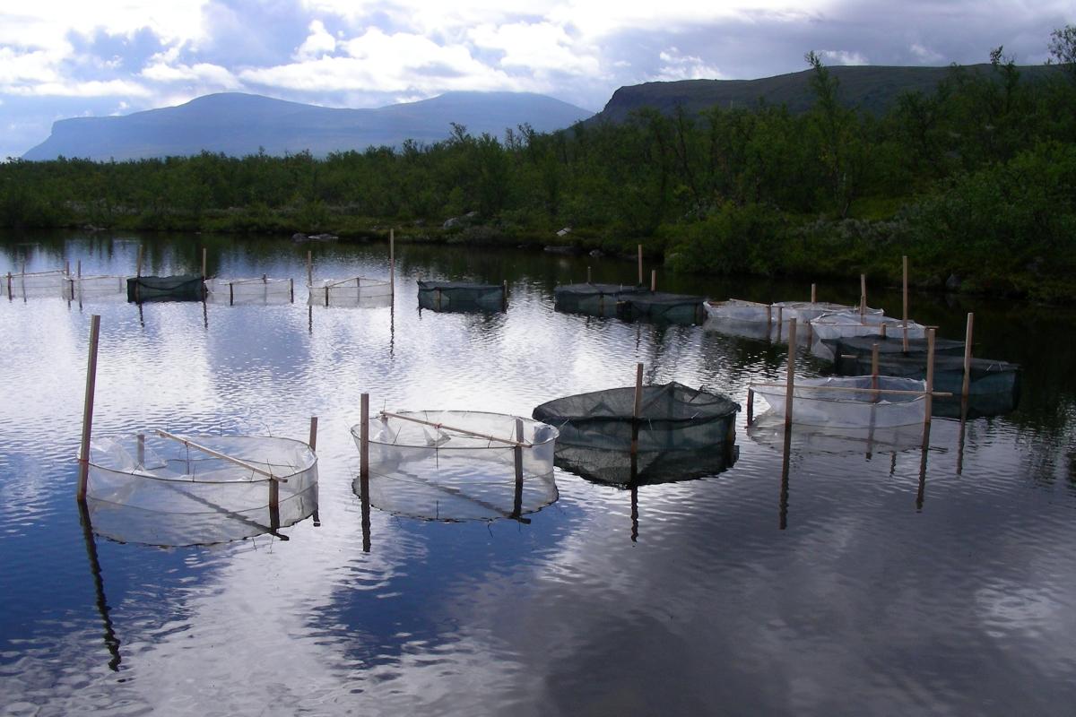 Lake Enclosures 1200x800.jpg