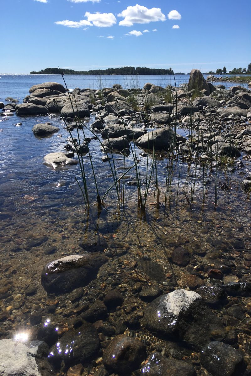 Västervadet_coastal_site_by_Jenny_Ask_on_180620 800x1200px 72dpi.jpg