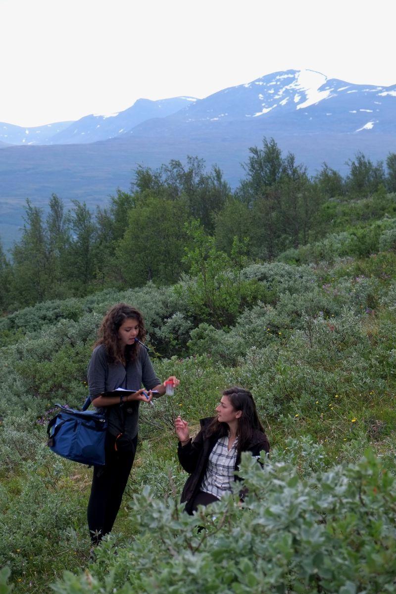 Bumblebee Phenology, Nuolja, w. Tara Cox, Olivia Bates, Frida Brännlund 9248 800x1200px 72dpi.jpg
