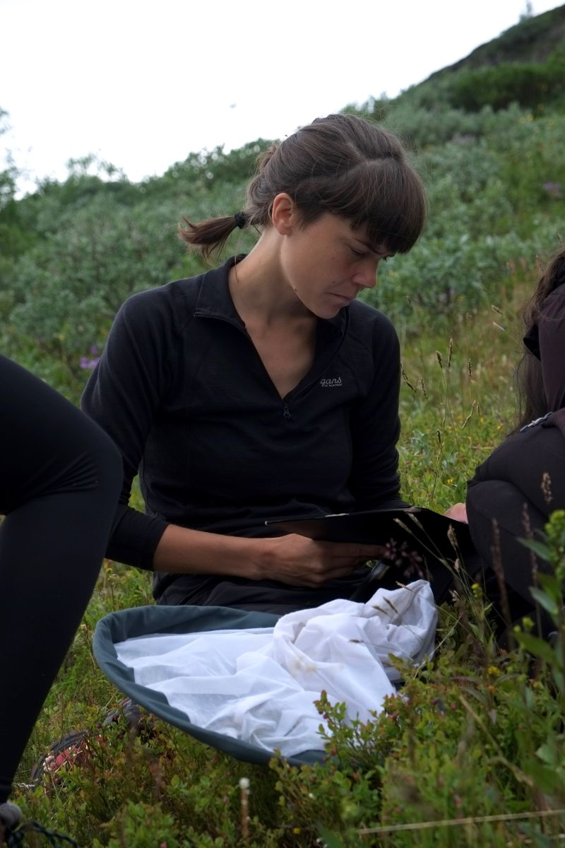 Bumblebee Phenology, Nuolja, w. Tara Cox, Olivia Bates, Frida Brännlund 9259 800x1200px 72dpi.jpg