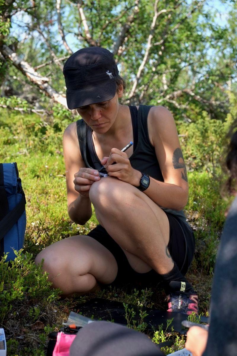 Bumblebee Phenology, Nuolja, w. Tara Cox, Olivia Bates, Frida Brännlund 9386 800x1200px 72dpi.jpg