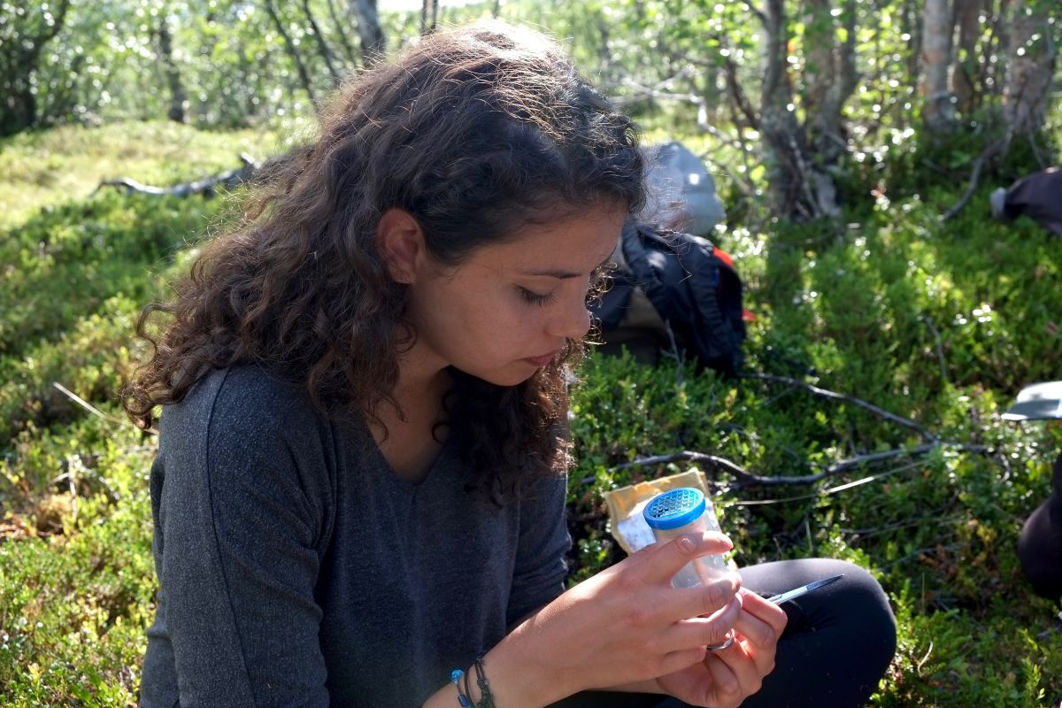 Bumblebee Phenology, Nuolja, w. Tara Cox, Olivia Bates, Frida Brännlund 9381 1200x800px 72dpi.jpg
