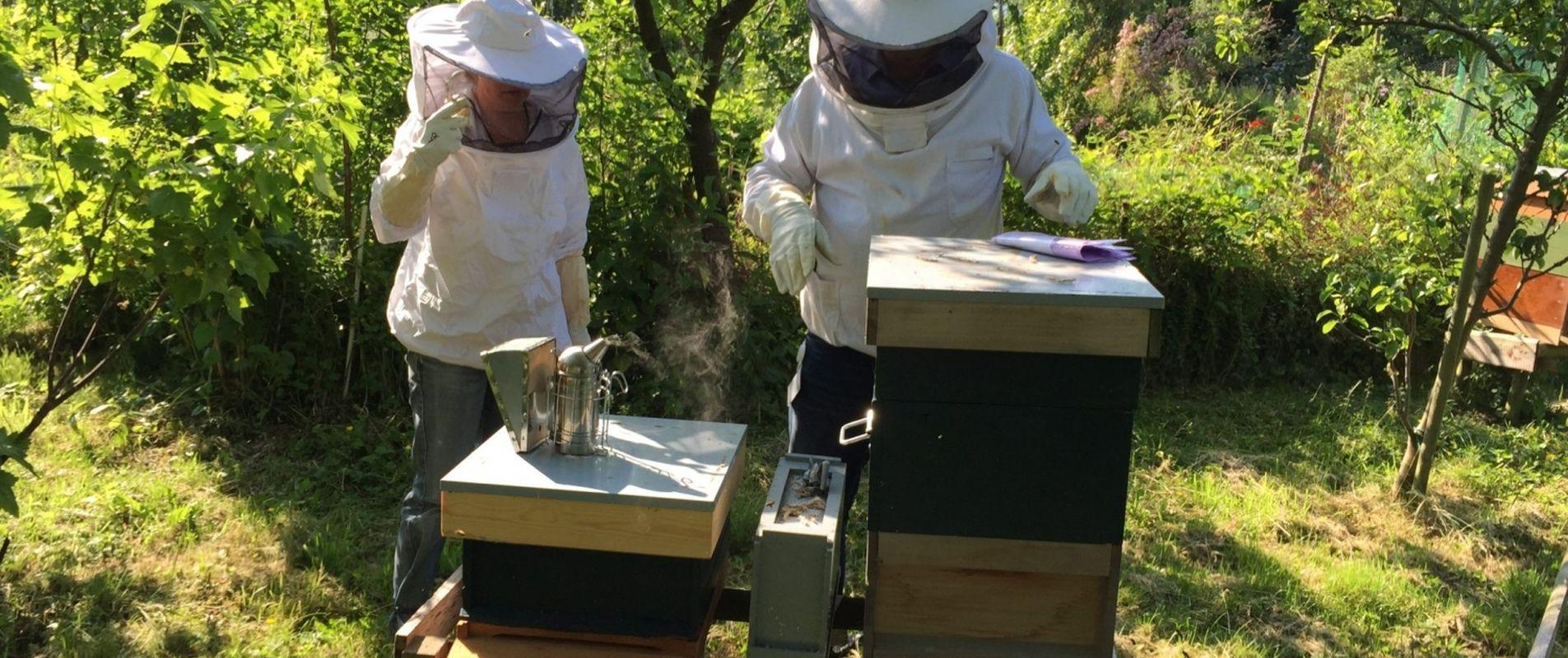 insect-invertebrate-beekeepe-1200x800px 72dpi.jpg
