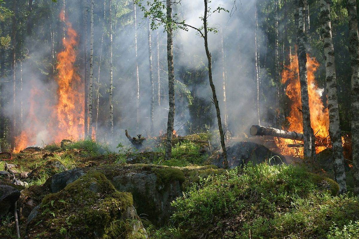 forest-fire-432870_1200x800px 72dpi.jpg