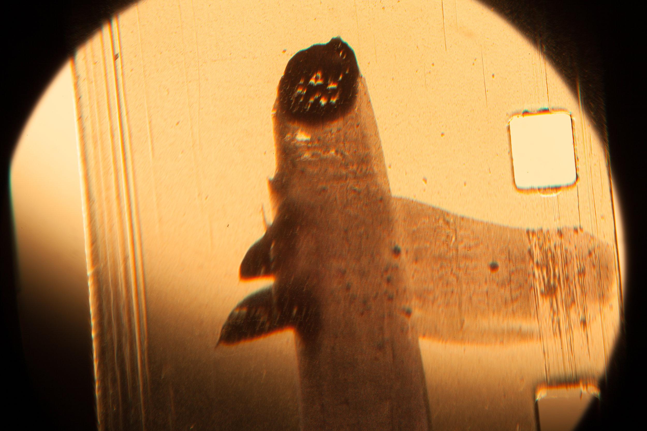 lookingatchemicals.super8mm.fosil.jpg