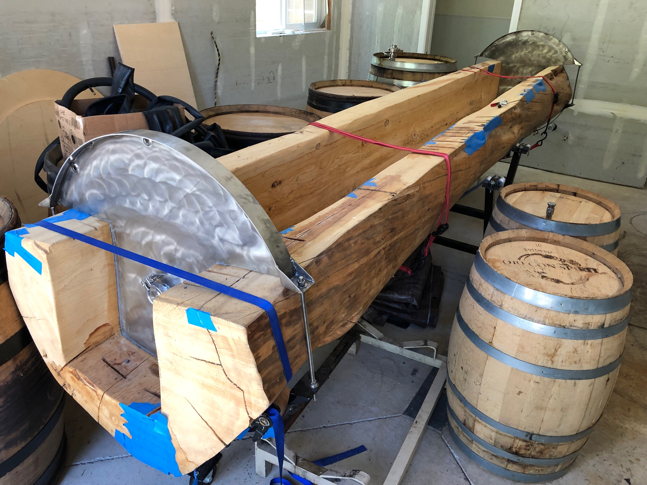 The future coolship—a spruce tree.