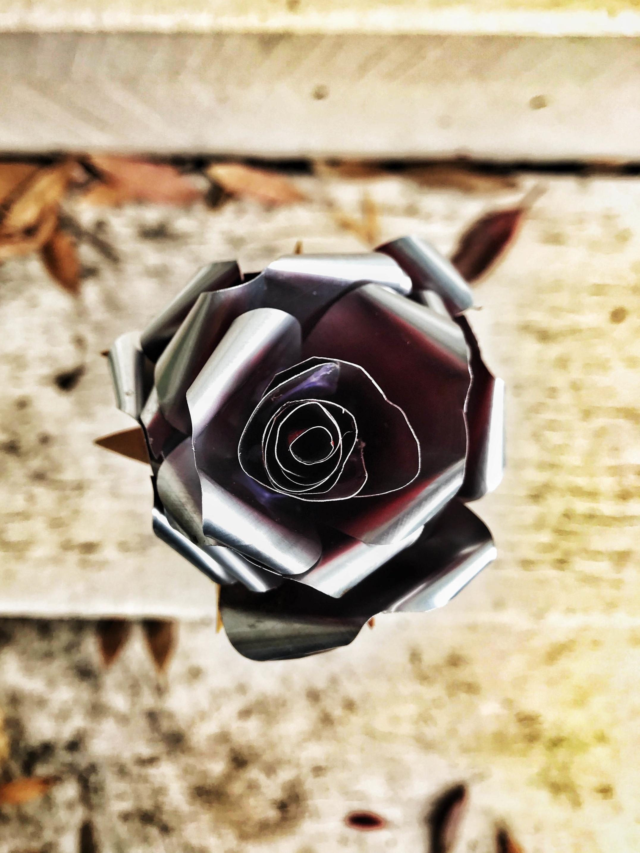 red_rose_02.jpg