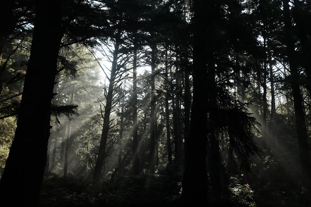 OregonCoast_6_b.jpg