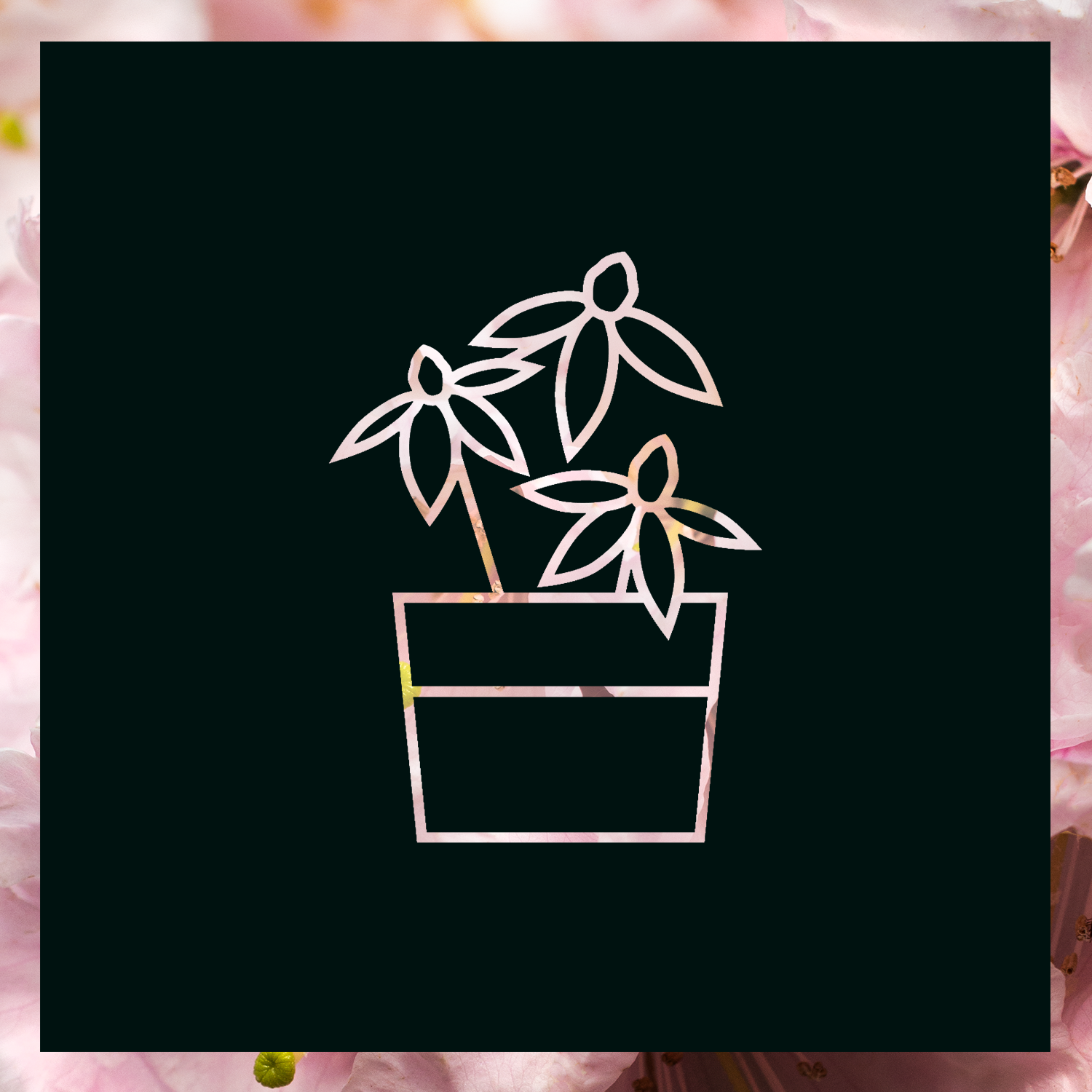 Reuthes-Nursery-Background-Pink-Blossoms.png