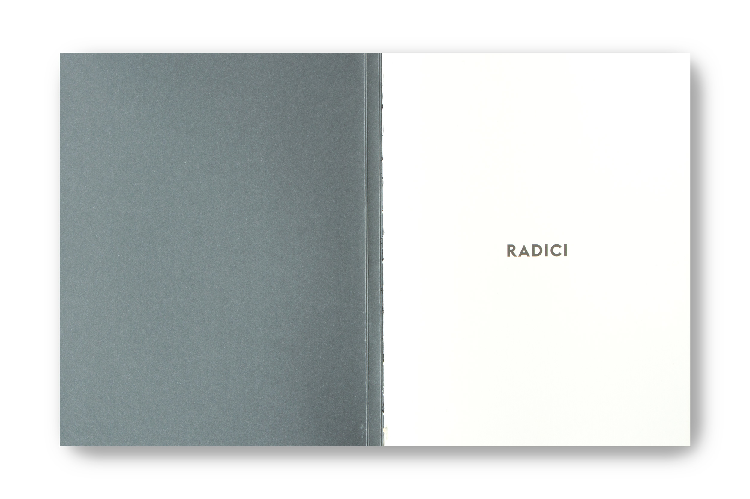 radici_02.jpg