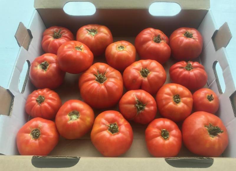 tomatoes in box.jpg