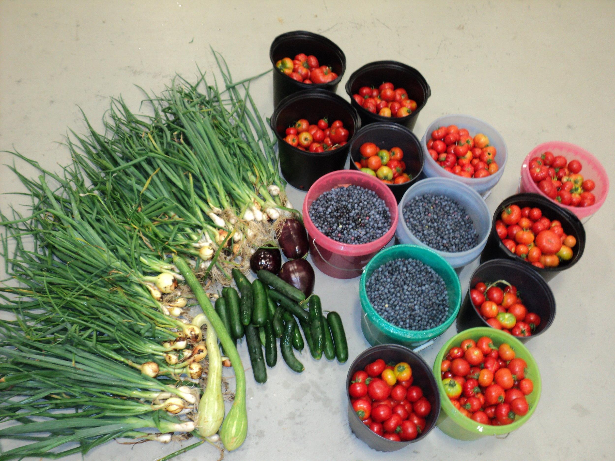 MFF Harvest 7-15-12.JPG