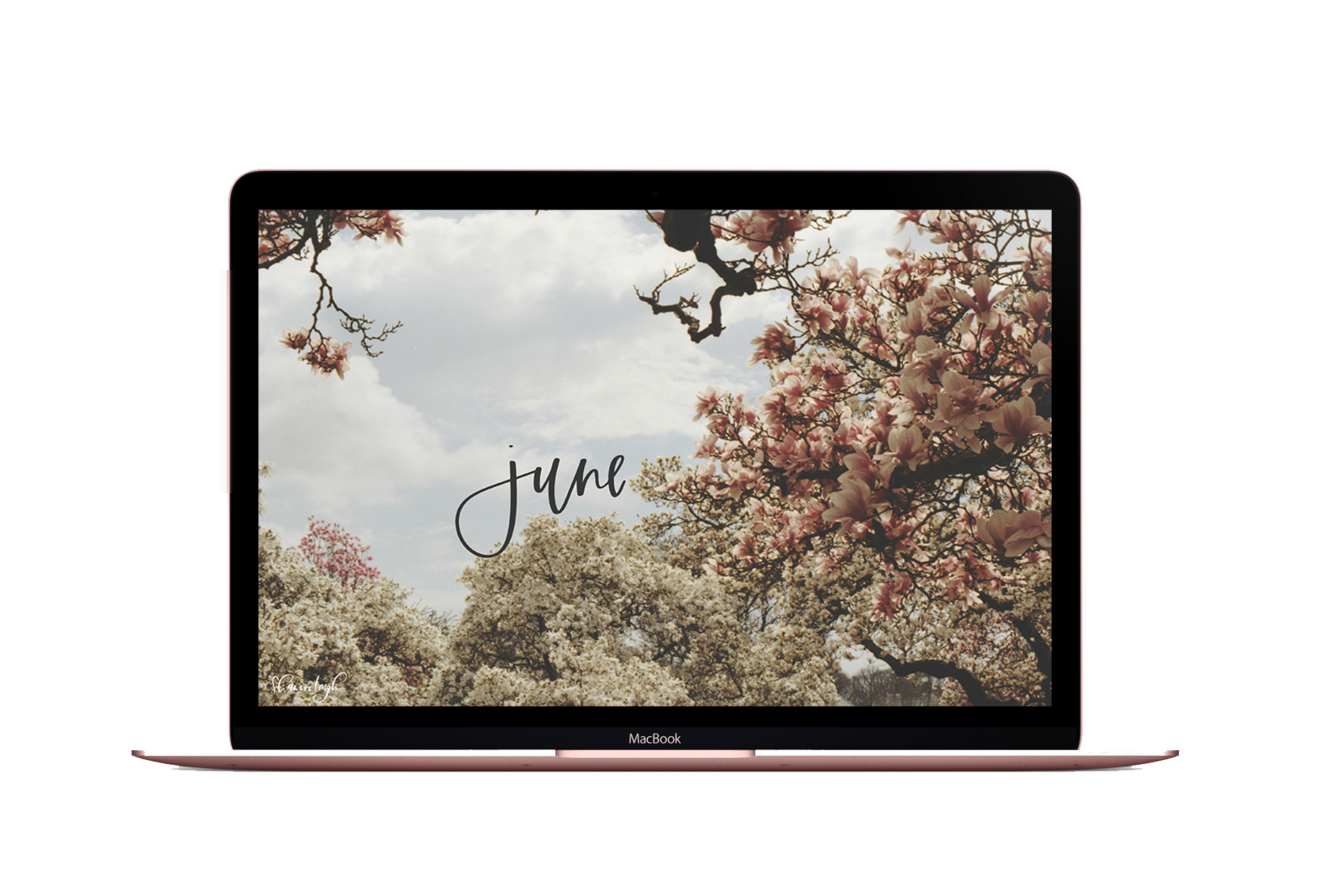 Rose-Gold-MacBook-Mockup-Free.jpg