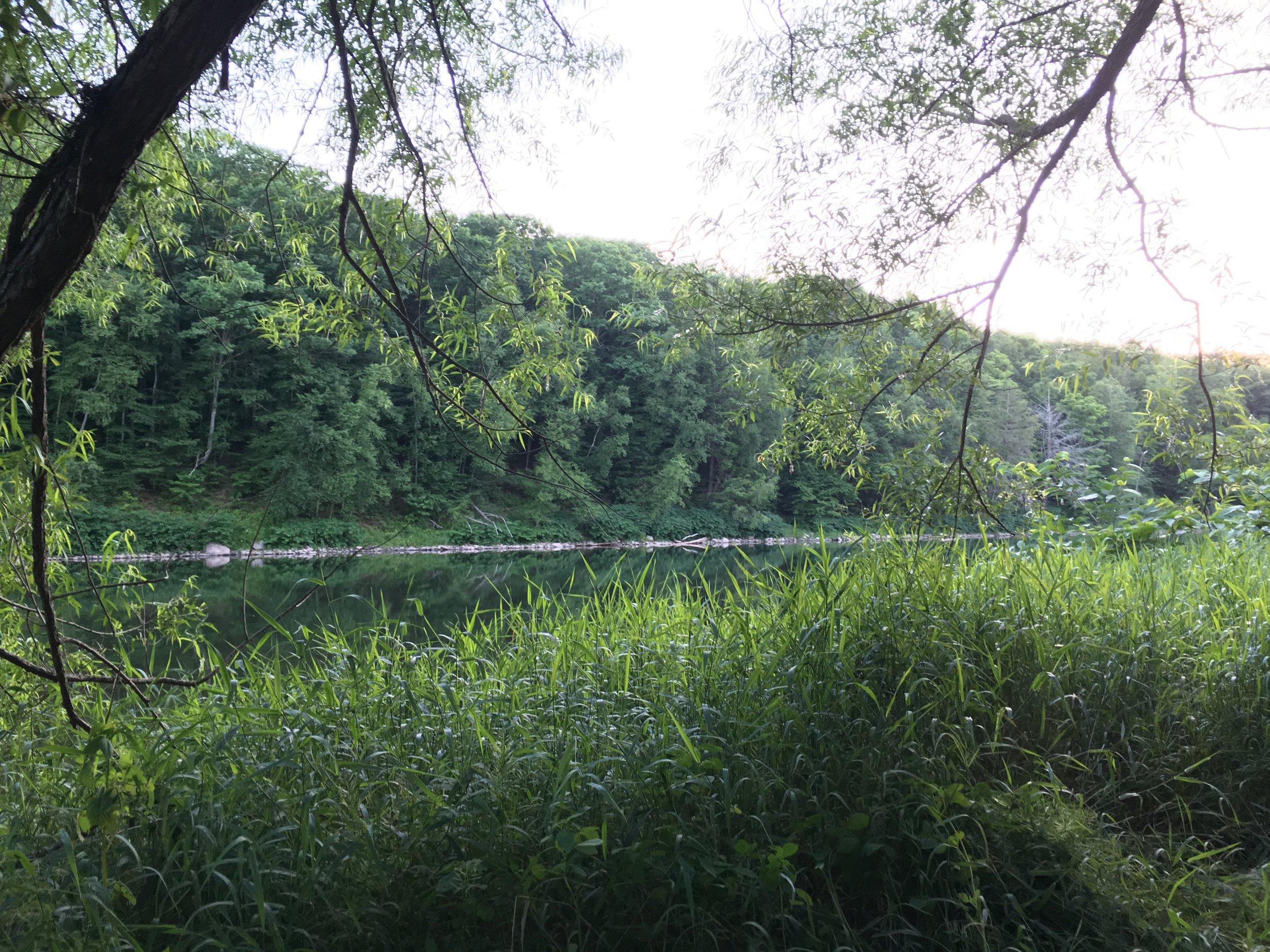 grassy river.jpg