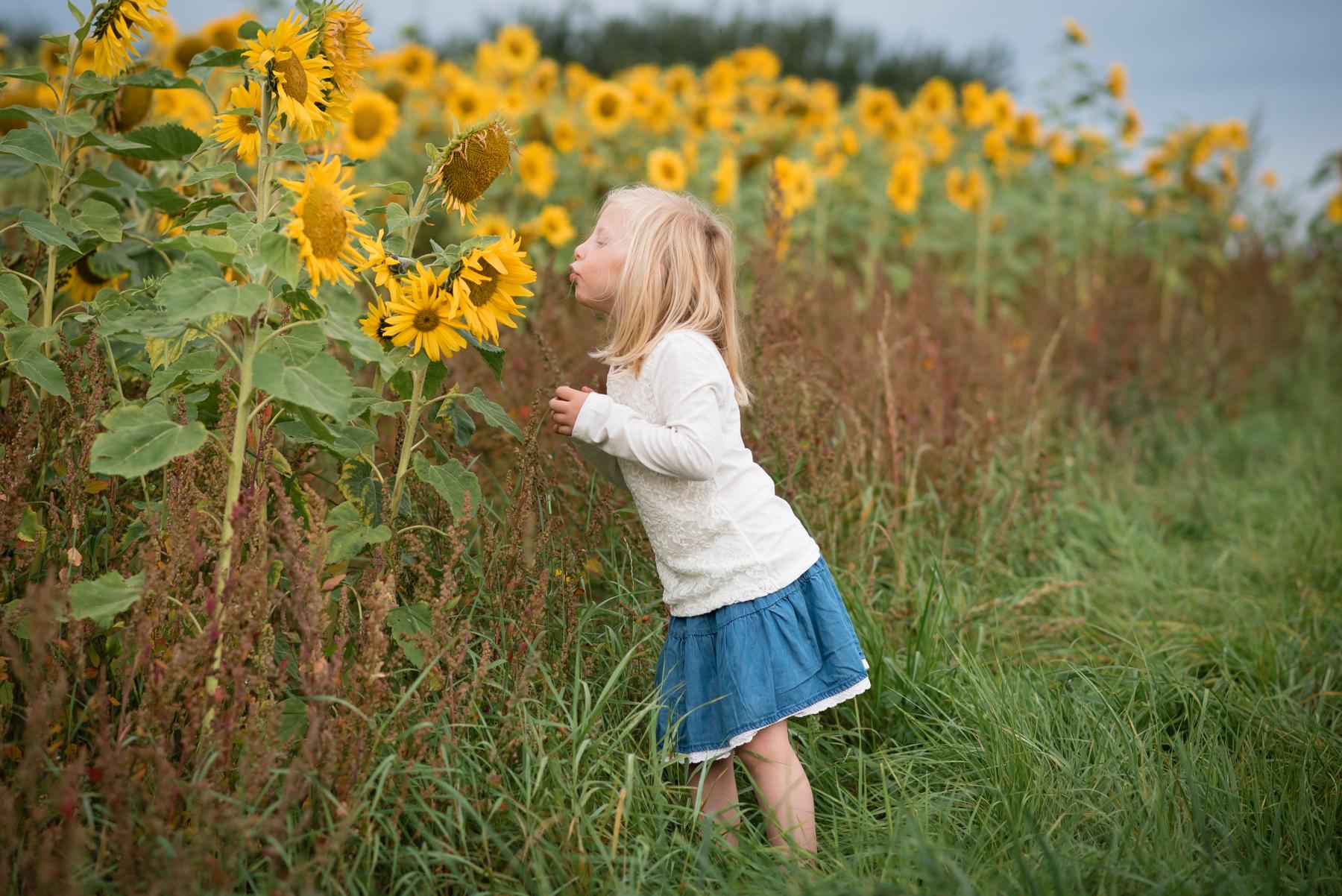 sunflower-8.jpg