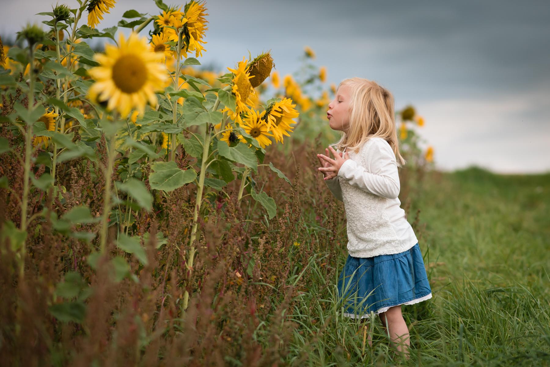 sunflower-9.jpg