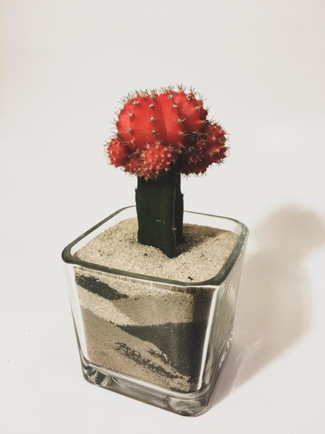 Pom Pom Cactus TheCoffeyShop.co (8).jpg