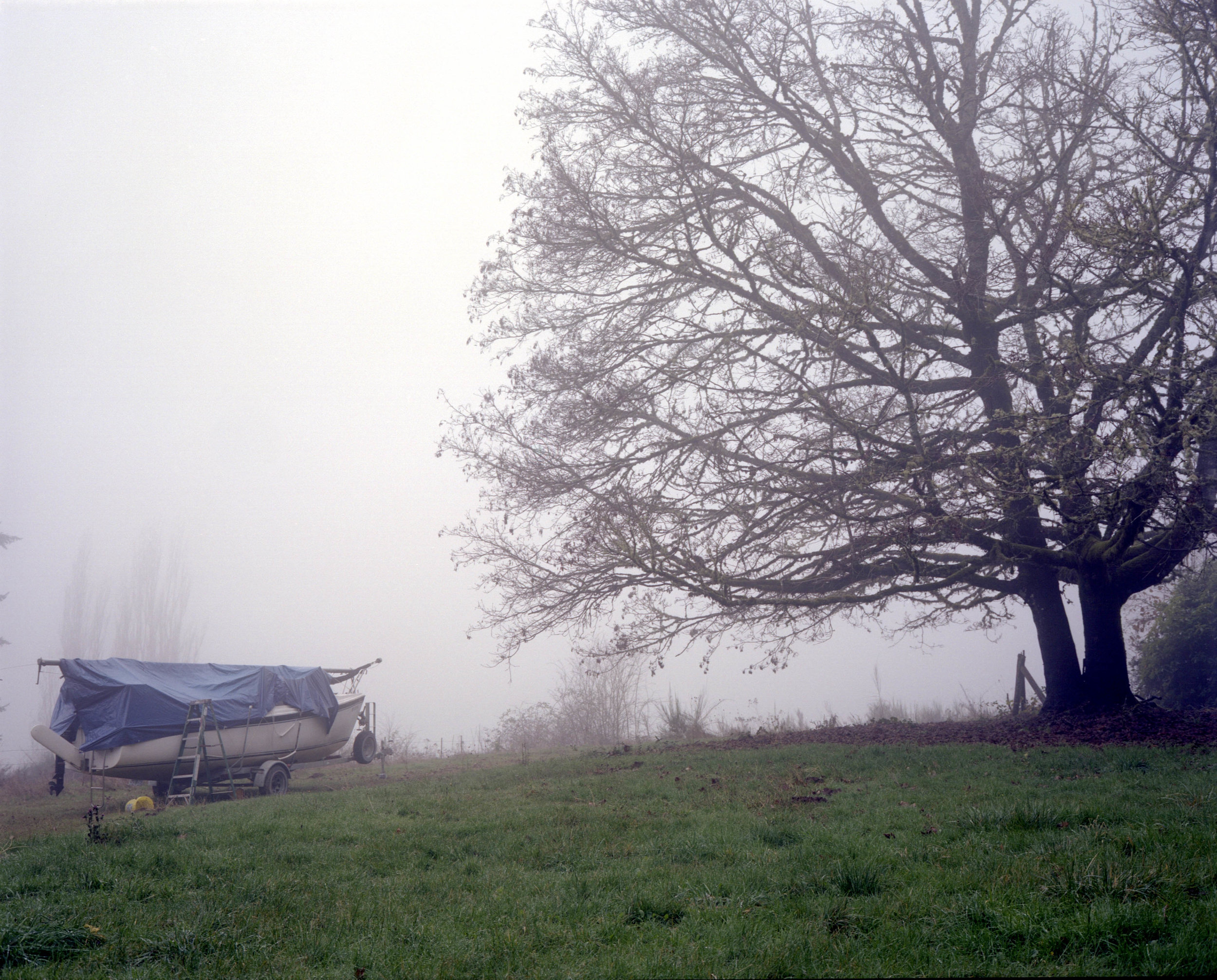 PM-051.pdx.tree_boat_fog.jpg