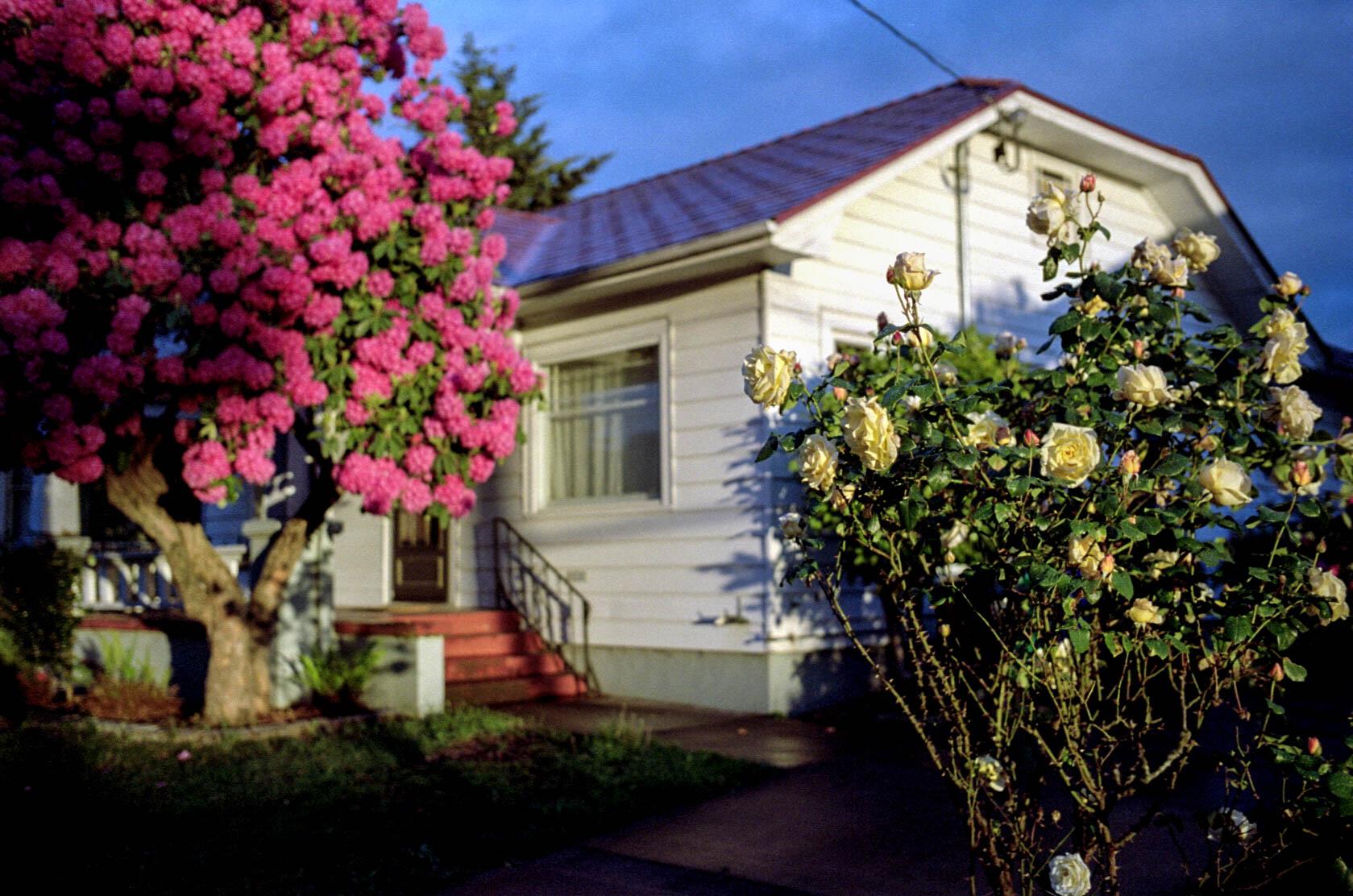 M7-082.pdx.house_light_flowers_2.jpg