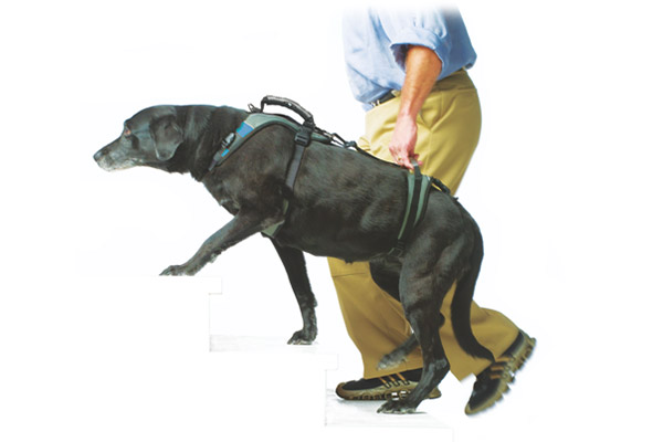 Help 'Em Up Harness - -A complete shoulder and hip harness system that is designed to stay on your dog for extended periods of time- Website has information and videos about sizing for appropriate harness and hip lift- Can be ordered directly or measured/fitted during appointments