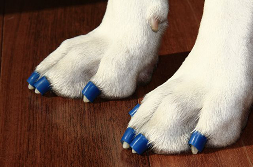 Dr. Buzby's Toe Grips - - Non slip nail grips that fit onto dogs' toenails, adhere by friction, and create the GripZone—gripping the floor in a way a dog's toenails cannot- Website has information on sizing- Can be ordered directly or purchased through Moore Pet Mobility (kept in stock)
