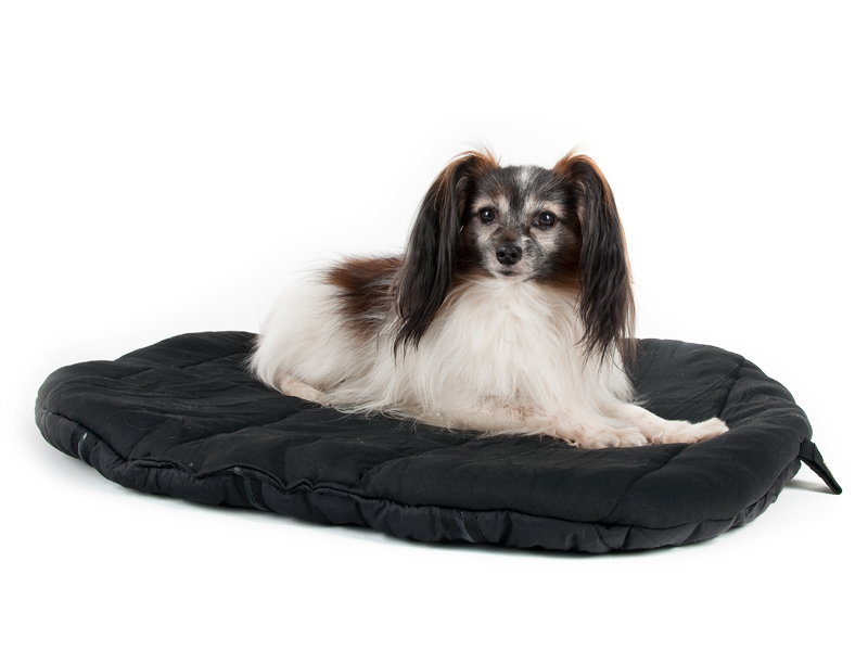 Back on Track - - Blankets, wraps and beds made with ceramic fibers fused into fabric- Ceramic fibers radiate body heat back to the pet as long-wave radiation which is thought to increase blood flow- Website has information about sizing- Can be ordered directly