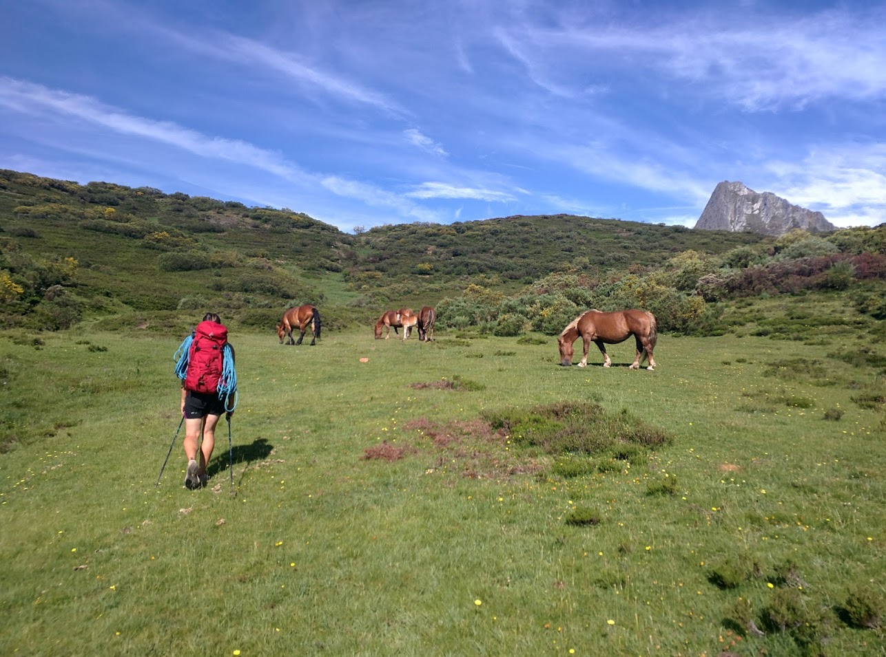 Not the most obvious trail - but just ignore the cows and horses and walk towards the pointy thing.