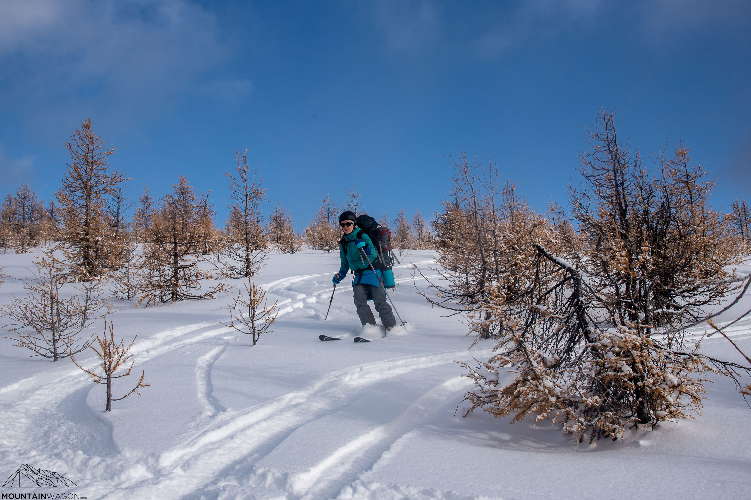 Christine skiing through the larch filled slopes leading from Healy Pass down to the Egypt Lake Hut