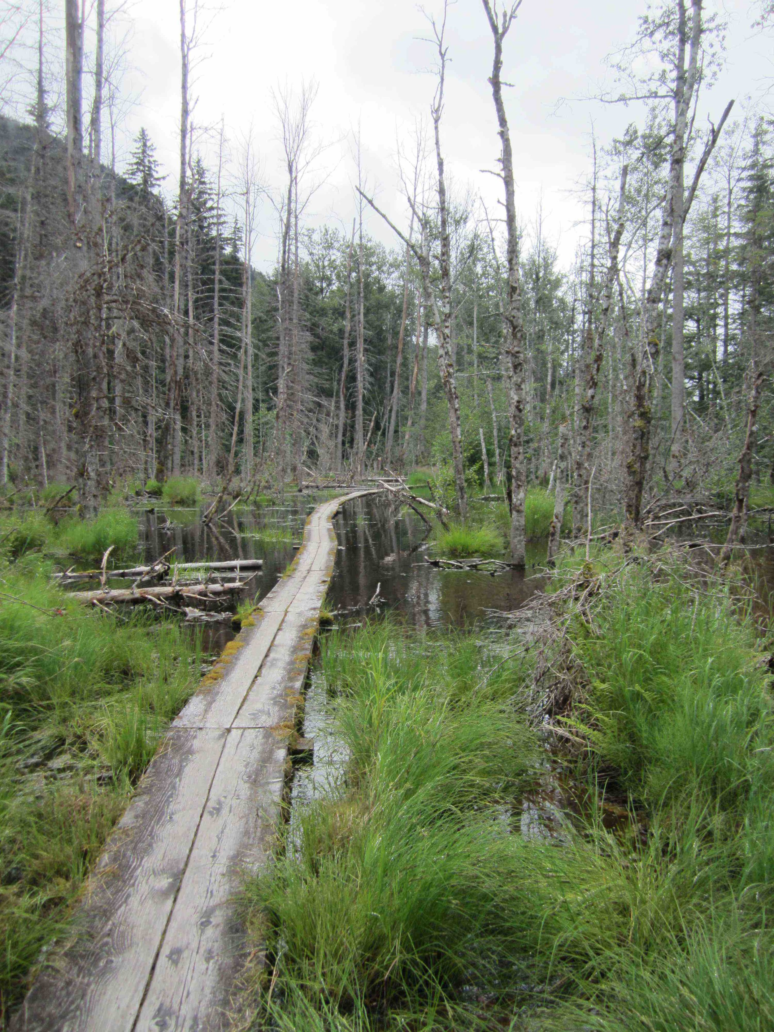 The first of the trail on the Alaskan side was very lush and dump. (coastal rainforest)