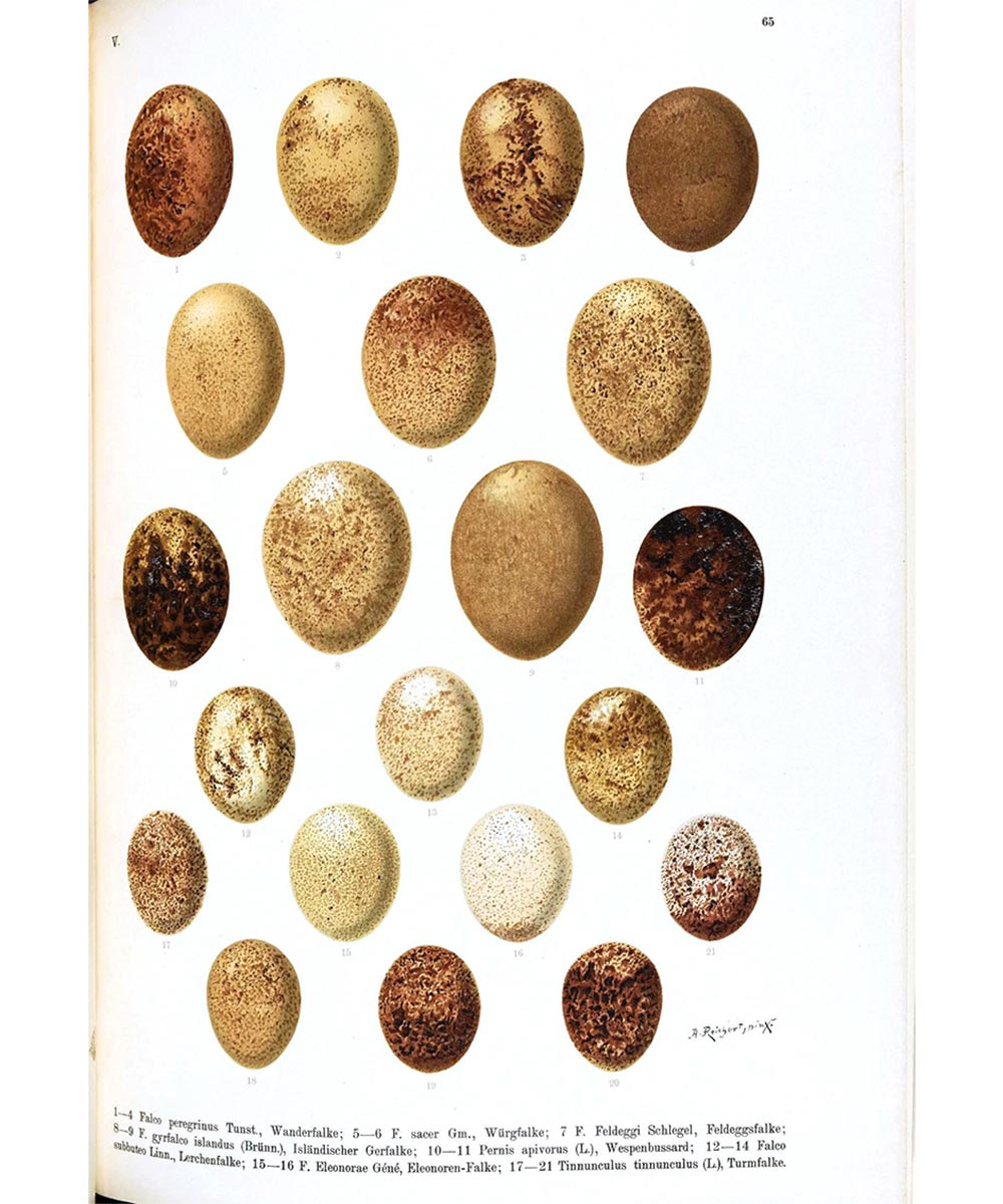 LW-Art-Eggs1.jpg