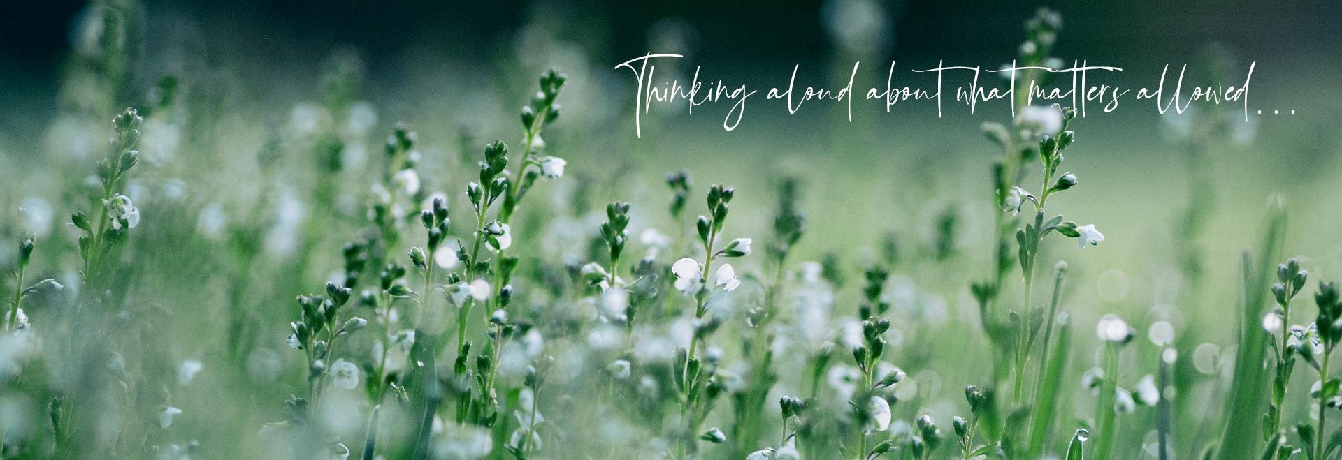 BELONGING blog header.png