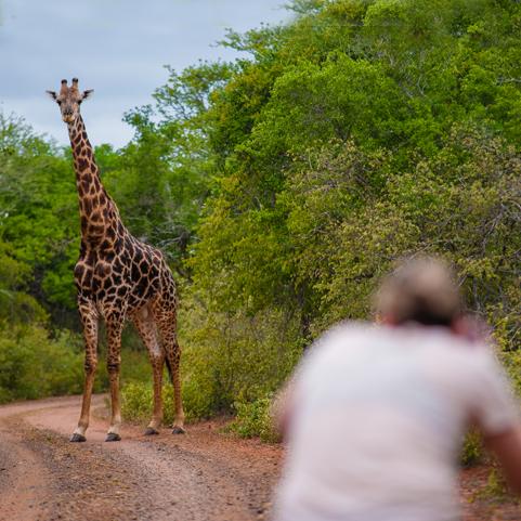 shannon_giraffe.jpg
