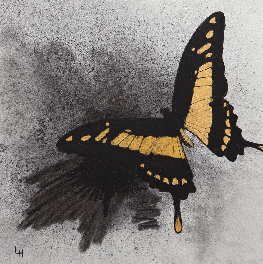 24. Papilio thoas.jpg