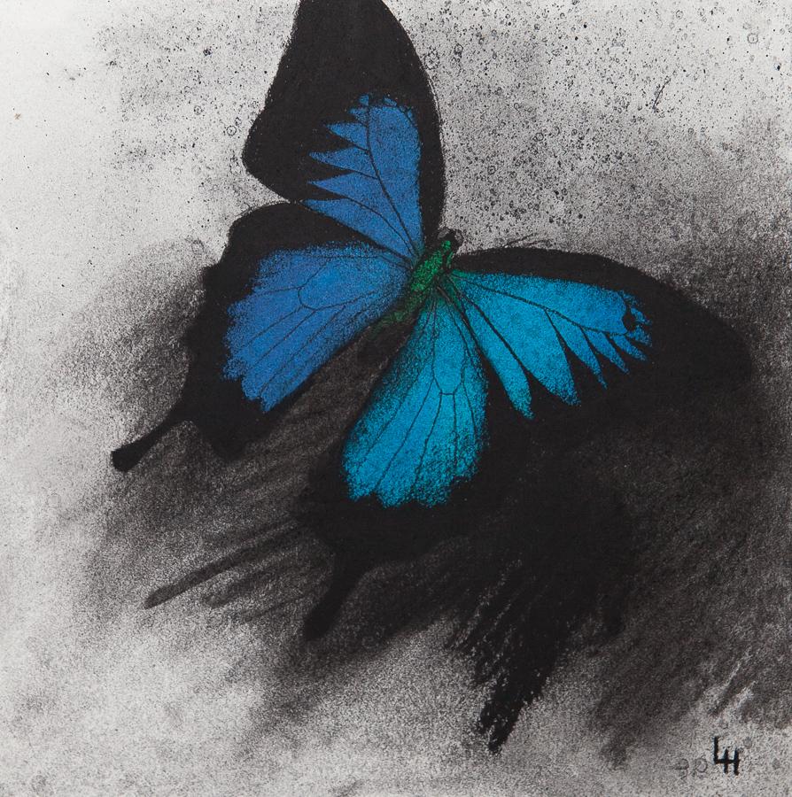 22. Papilio ulysses.jpg
