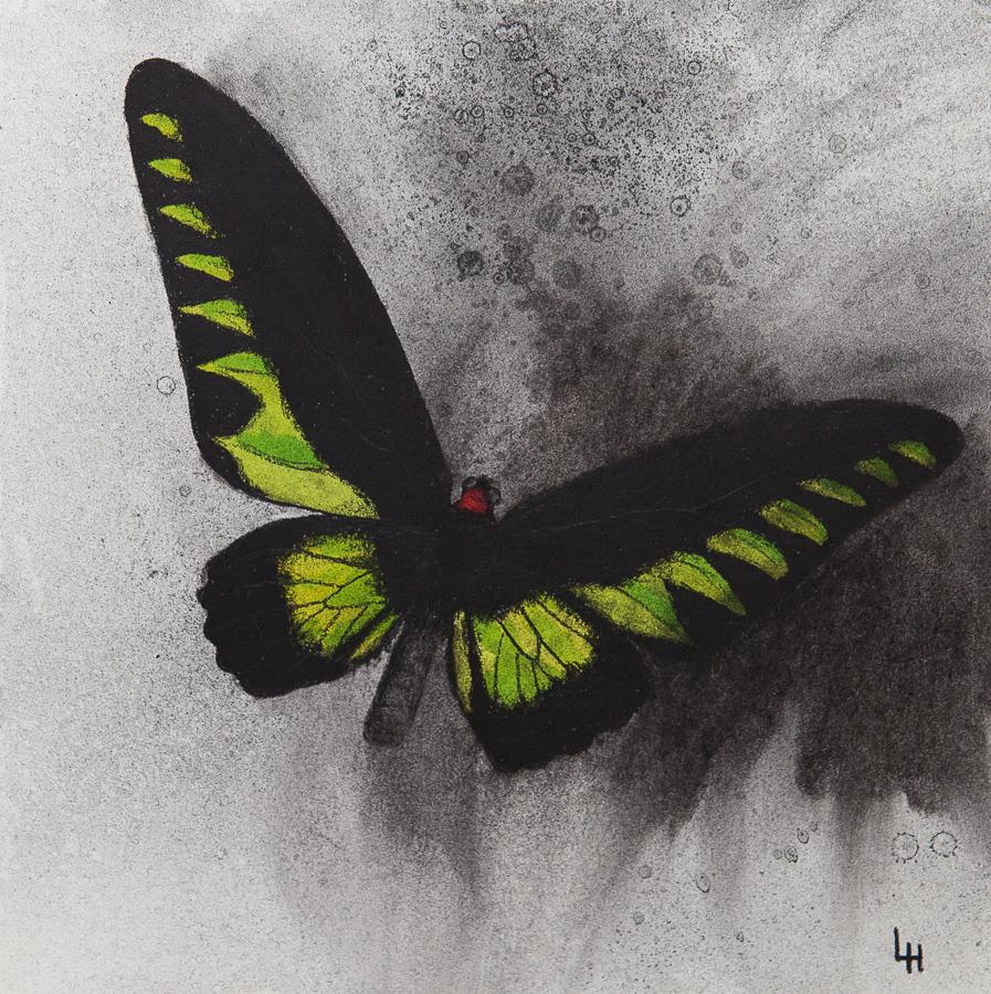 20. Trogonoptera brookiana.jpg