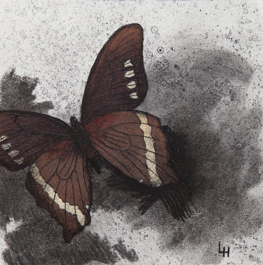 17. Papilio desmondi.jpg