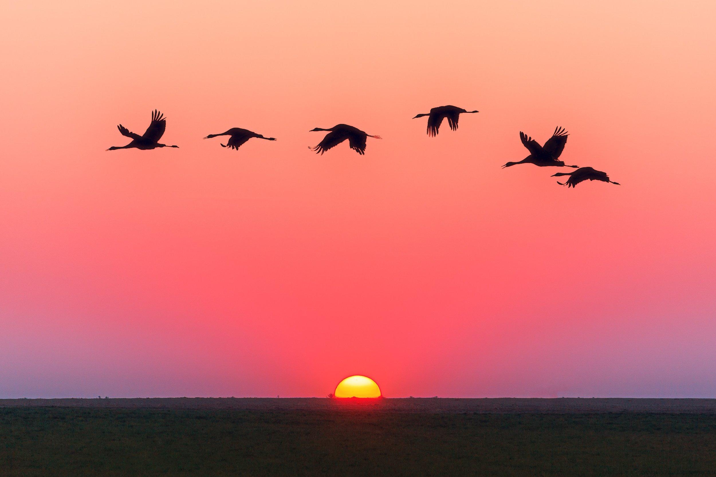 animals-backlit-dawn-1126384.jpg