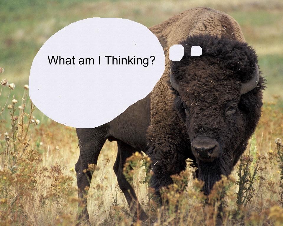 buffalo thought bubble.jpg