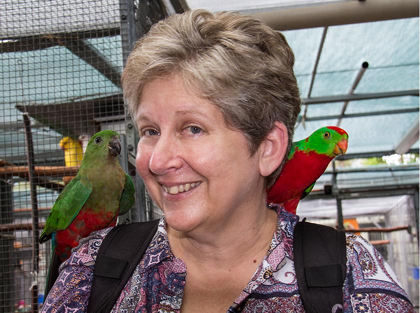 Parrots in Paradise FB.jpg
