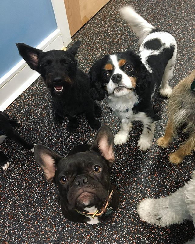 Am I in heaven? Or just BarkPark's small dog playroom? 😇😍