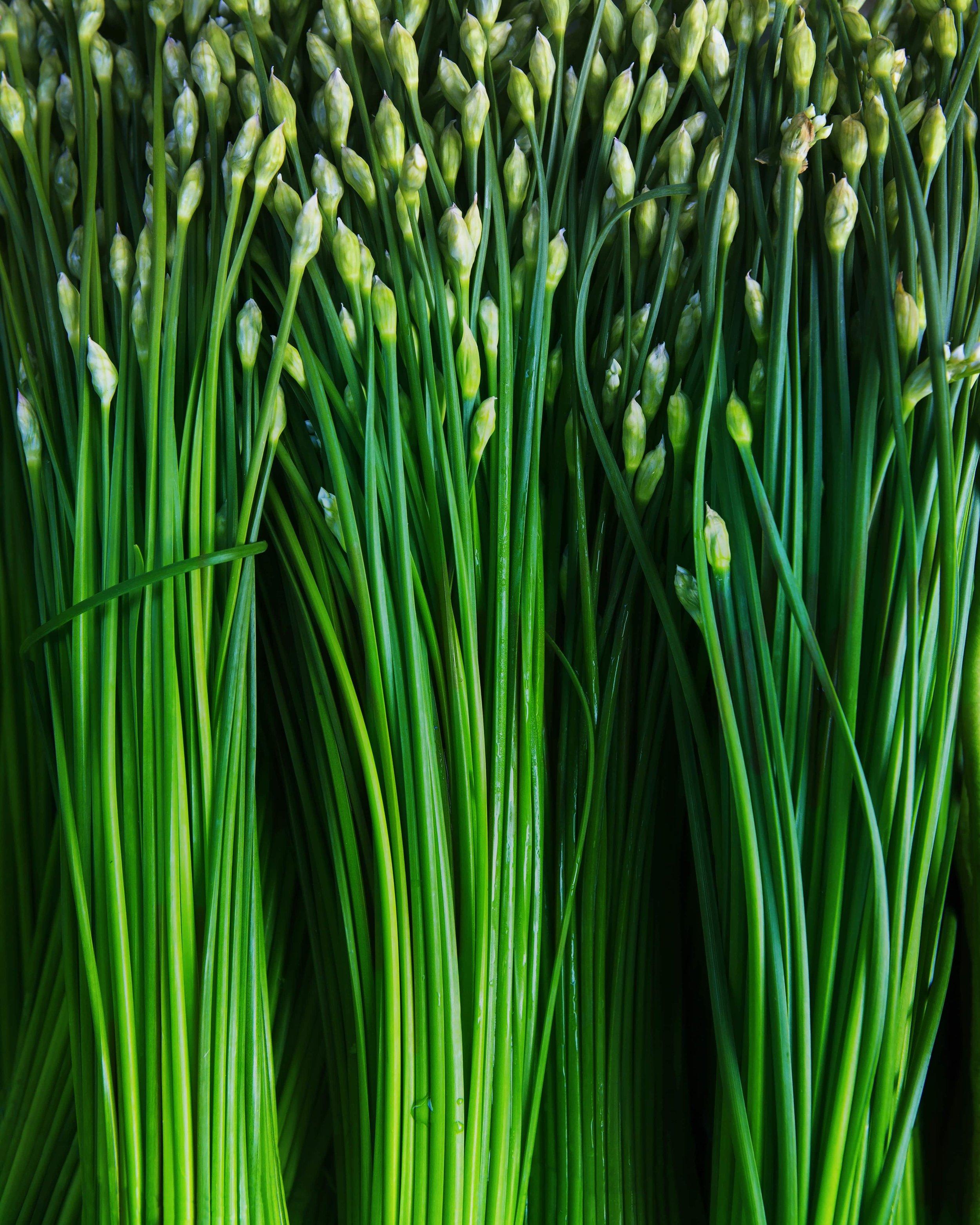 Garlic Chives