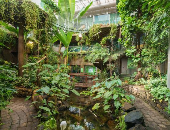 Otago Museums Tropical Forest   https://otagomuseum.nz/venues/venue/science-centre